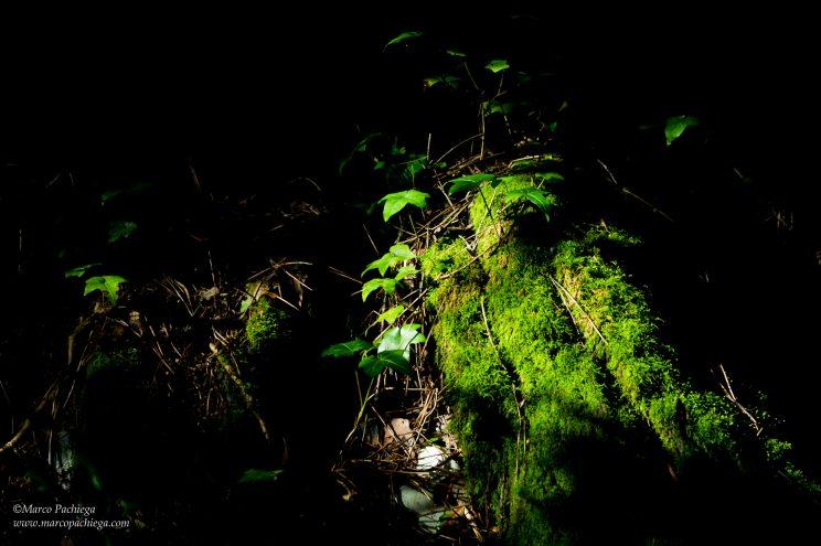 la floresta trekking