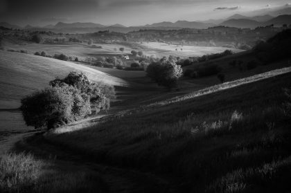 LANDS, MARCHE IN BLACK AND WHITE